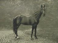 Hans [http://commons.wikimedia.org/wiki/File:Hans_1910.jpg]